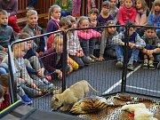 Za dětmi z třeboňské základní školy v Sokolské ulici přijela návštěva ze zoo. Foto: Radka Škulaviková