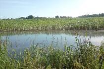 Tahle vodní plocha nemá s romantickým rybníčkem nic společného. Jedná se o kus zatopeného pole s kukuřicí u Plavska.