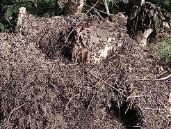 """Slunečné dny """"postrčily"""" směrem k jaru přírodu i v chráněném území přírodní památky Matenský rybník u Jindřichova Hradce. Do práce se dali i mravenci."""