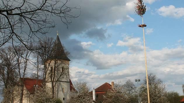 Májka v Lomnici nad Lužnicí na Farské louce.
