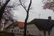 Stromy, které jsou určené k rychlému pokácení kvůli svému špatnému stavu.