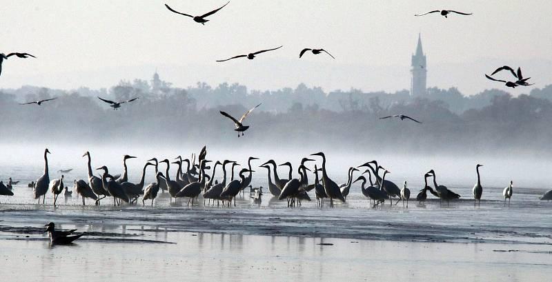 Výlov rybníka Rožmberk, který je největší v republice.