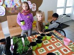 Děti z praktické základní školy uklízely okolí budovy a věnovaly se zahradničení.