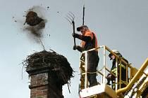 Část čapího hnízda v Plavsku spadla, tak bylo nutné ho celé sundat a instalovat novou podložku.