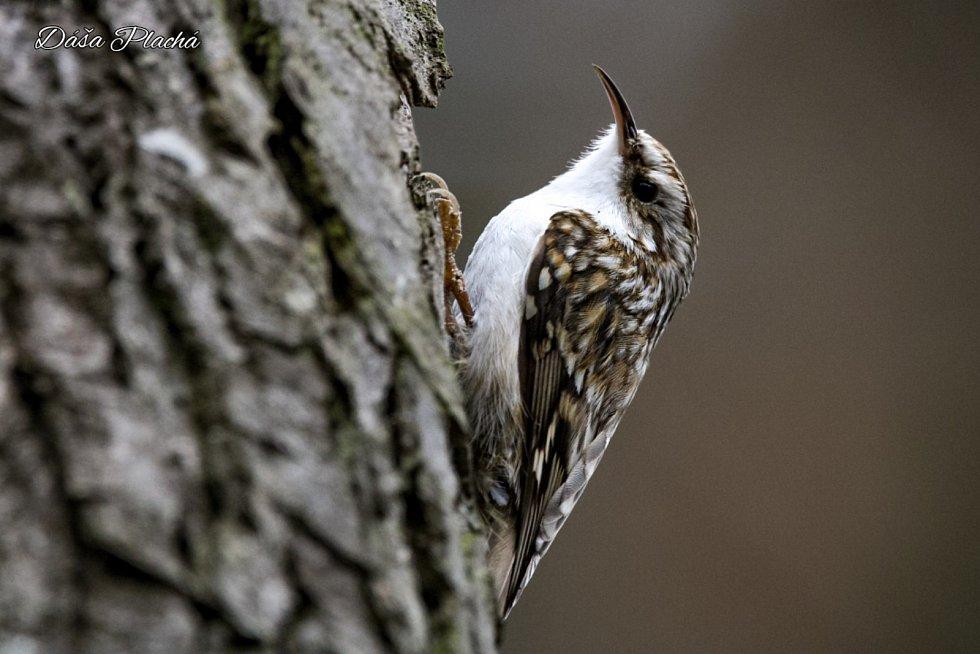 Okolo obce Pístina zachytila Dagmar Plachá spoustu ptáků a zvěře.