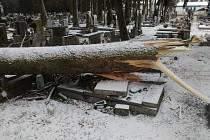 Při novoroční vichřici popadaly stromy na městském hřbitově.