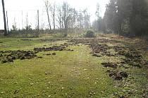 """Pohled na fotbalové hřiště v Plavsku, když ho poprvé """"zryli"""" divočáci."""