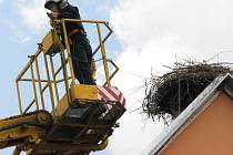 Čapí hnízdo v Kardašově Řečici bývalo obsazené. Snímek je ze záchrany opuštěných čapích vajec v roce 2011.