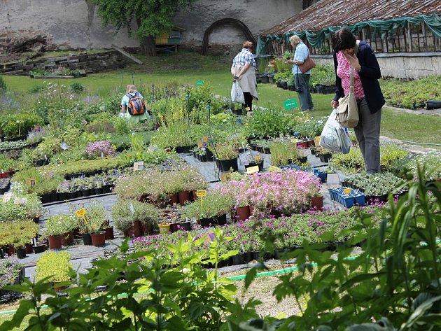 Přírodní zahradu vTrvalkové školce Florianus si návštěvníci mohou prohlížet už několikátým rokem. Letos se otevře vsobotu od 9do 17hodin.