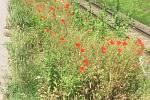 Jihočeška vyšla v neděli 28. června z Velkého Ratmírova na putování na Velehrad, při své symbolické cestě vzpomíná na svůj boj s rakovinou. Ve čtvrtek se dostala na 150 kilometrů, dorazí na Dny lidí dobré vůle tento víkend?