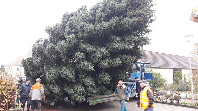 V Suchdole nad Lužnicí už mají na náměstí připravený vánoční strom. Rozsvítí jej o první adventní neděli.