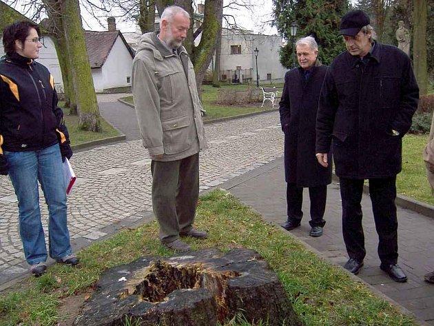 Právě tento pařez nedaleko sochy Mistra Jana Husa je pomyslným vztyčeným prstem. Je totiž němým svědkem nedávné události, kdy se strom úctyhodného průměru rozlomil a spadl jen pár metrů před dětský kočárek.