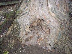 Stromy v jindřichohradeckém městském parku potřebují ozdravení.