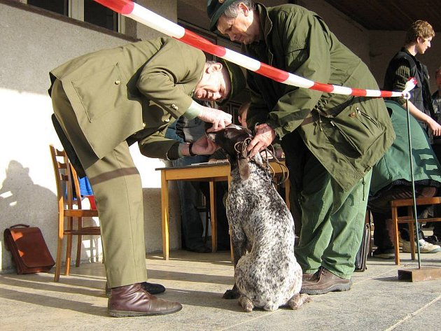 V sobotu se uskutečnil ve Velkém Ratmírově svod loveckých psů.