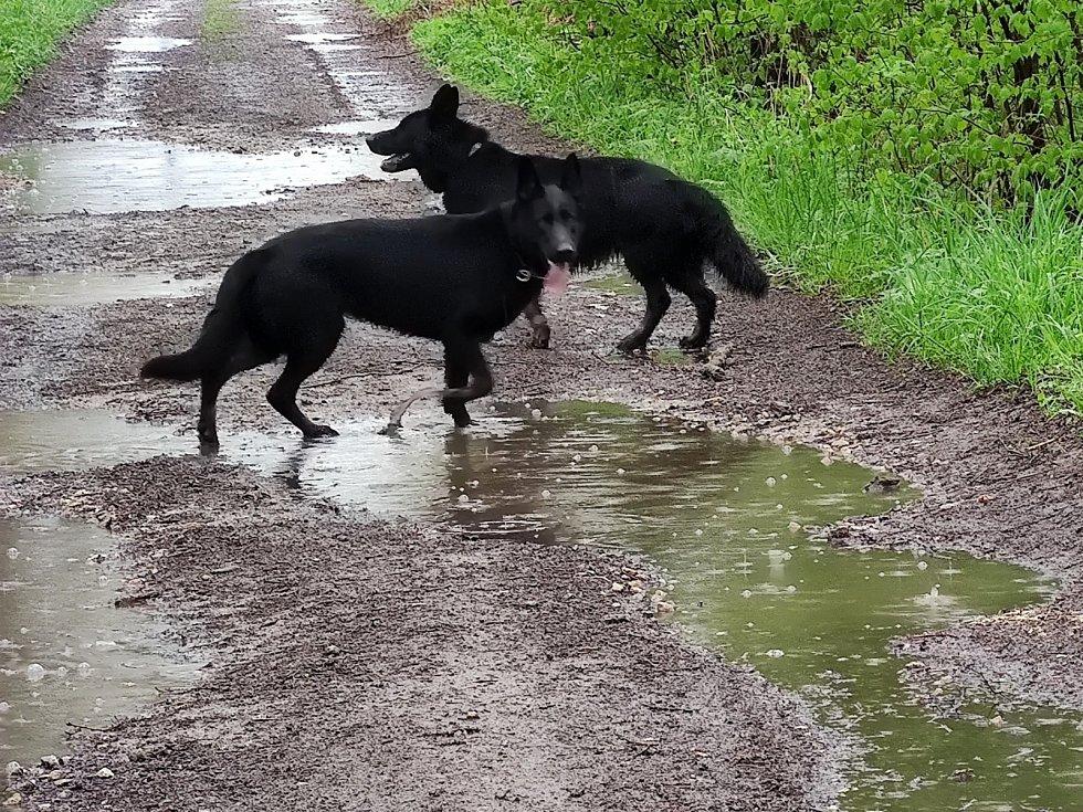 Propršená procházka kolem rybníka Velký Hroch u Jindřichova Hradce.