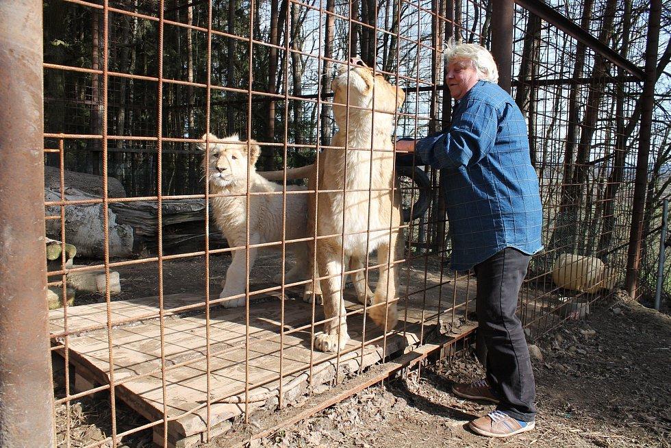 Iva Lapková Zelinová ze vsi Studnice na Jindřichohradecku si na důchod splnila svůj sen a pořídila si lvy.
