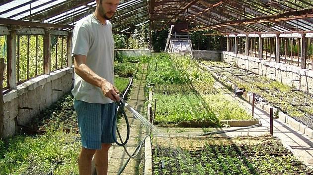 Radovan Hájek při zalévání ve skleníku.