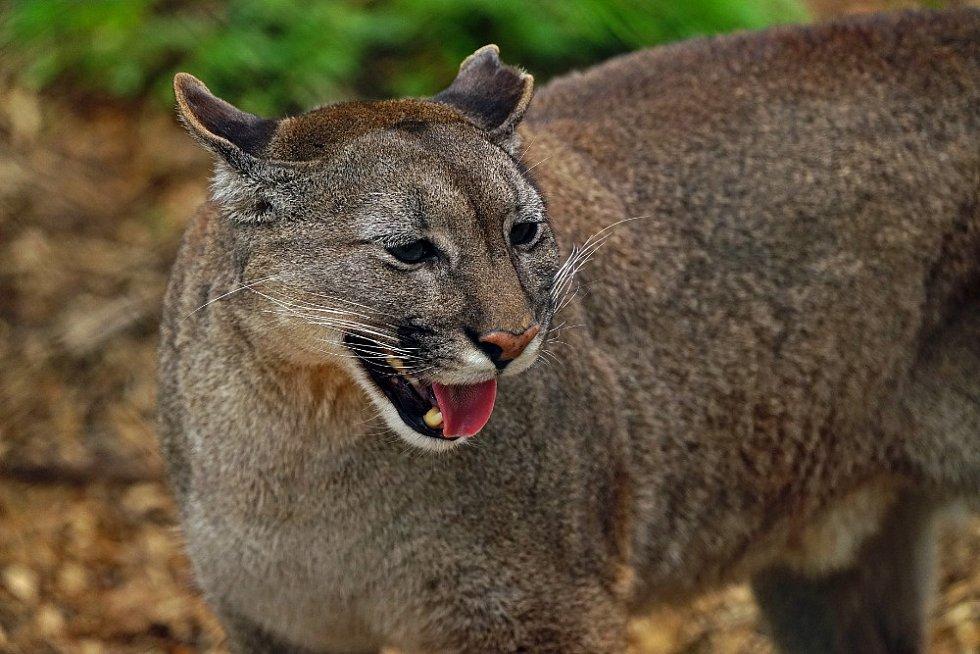 Zvířata ze Zoo Na Hrádečku v Horní Pěně