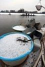 Výlov Opatovického rybníka v Třeboni