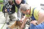 Konzervátoři Muzea Jindřichohradecka nyní čistí součástky u Otína nalezené německé stíhačky ze 2. světové války.