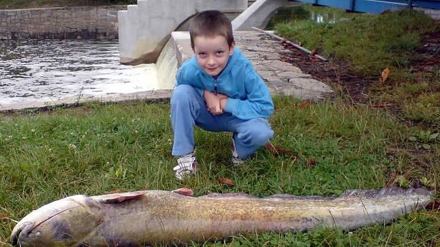 Pohled na uhynulé ryby v Lužnici. Byl mezi nimi i obrovský sumec.