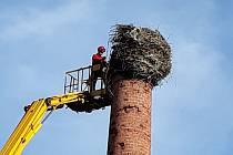 Ve Starém Městě pod Landštejnem museli ubourat část komínu s čapím hnízdem.