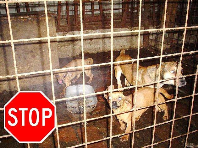 Množitele psů mohou zastavit především zájemci o levná štěňata. Když nebude poptávka, nepokvete ani obchod rádoby chovatelům.