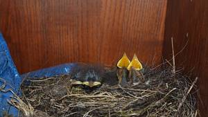 Pohled do hnízda