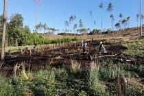 Požár lesní školky u Jersic, části obce Hříšice, způsobil škodu za dvacet tisíc korun.