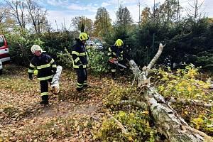 Dobrovolní hasiči z Jindřichova Hradce odstraňovali spadlý strom přes příjezdovou cestu v Horním Žďáru.