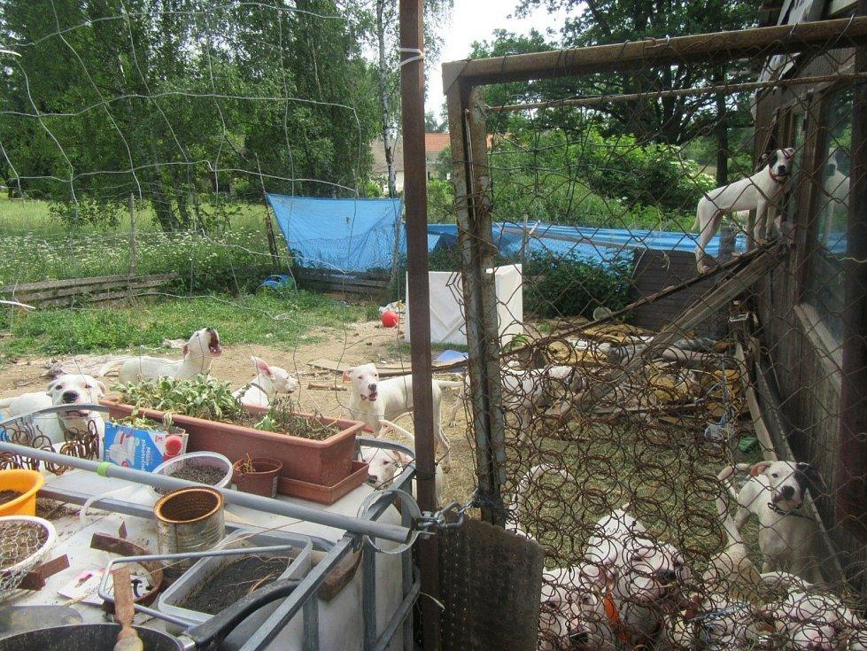 V mobilním domě ležely neodklizené výkaly, ve výběhu okolo něj se nacházely nebezpečné předměty, o něž se mohla zvířata poranit. V době kontroly nebyla k dispozici napájecí voda.