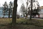 Pondělní vítr lámal větve stromů v areálu jindřichohradecké nemocnice.