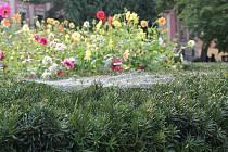 Léto je pryč. Na stromech se již objevuje barevné listí a dopoledne jsou vidět v parcích pavučiny. Příchod babího léta zažijete i například v třeboňském zámeckém parku.