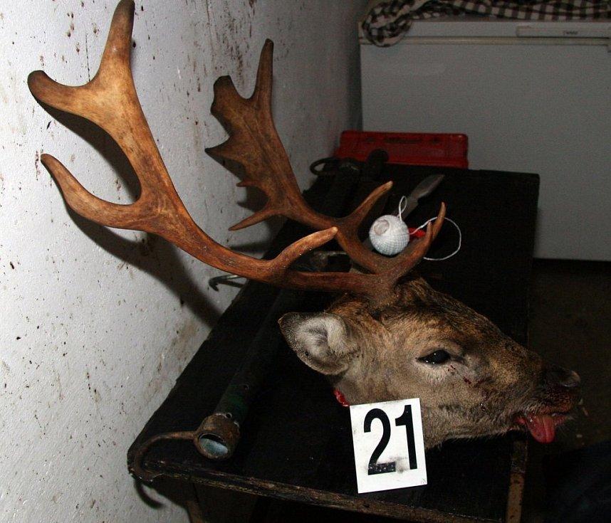 Maso, trofeje a zbraně nalezení při domovní prohlídce u dvou pytláků na Jindřichohradecku.