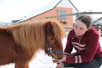 Jockey Club Malý Pěčín u Dačic je rájem pro děti, které se chtějí naučit pečovat o koně, psy či jiná zvířata.