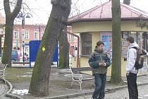 Městský park je místem, kde se pohybuje nejen hodně lidí, ale i dětí. Nebezpečné stromy proto mají zmizet.