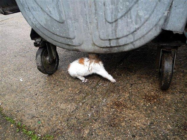 Hasiči zachránili kotě, které uvízlo v odtokové rouře kontejneru.