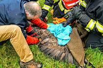 Ve středu 22. června čekal na hasiče netradiční zásah, pomáhali chytat orla mořského.