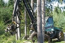 Těžba napadených stromů kůrovcem.