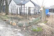 Před pěti lety řádil orkán Kyrill i na Jindřichohradecku. Popadané stromy podél cesty u jindřichohradeckého Adaco.