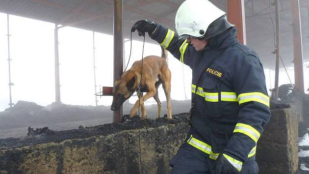 Vyšetřování ničivého požáru skladu sena v Klášteře na Novobystřicku, který způsobil škodu za devět milionů korun, pokračuje. Spáleniště již prohledával i policejní pes - specialista na vyhledávání akcelerantů hoření. Na snímku psovod Pavel Majer.