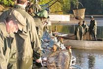 Výlov rybníka Potěšil na Lomnicku.
