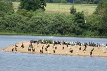 Ptačí ostrov na rybníku Koclířov