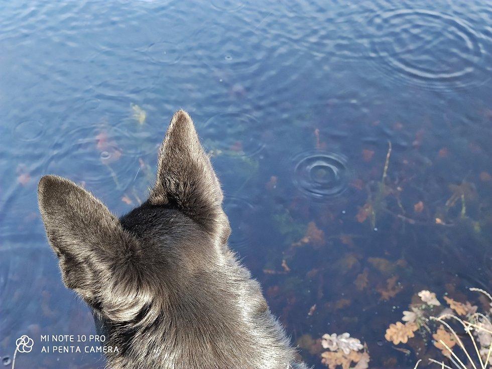 Slunečný listopadový den přinesl nevšední pohled na hladinu rybníka Chmelovský u Vydří na Jindřichohradecku.