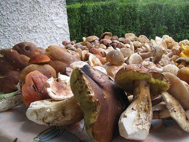 Úroda hub v lesích okolo Lomů.