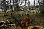 V třeboňském zámeckém parku se provádí kácení stromů.