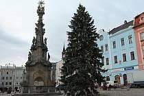 Smrk na náměstí Míru v Jindřichově Hradci už čeká na rozsvícení.