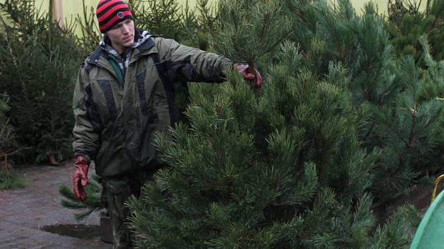Prodej vánočních stromků je již v plném proudu.