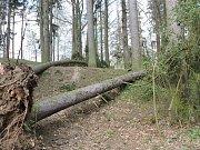 Vítr poničil stromy v Mertových sadech v Hradci.