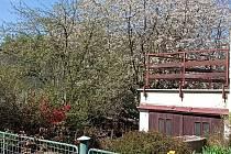 Jaro na Jindřichohradecku vyfotila Jana Koubová.